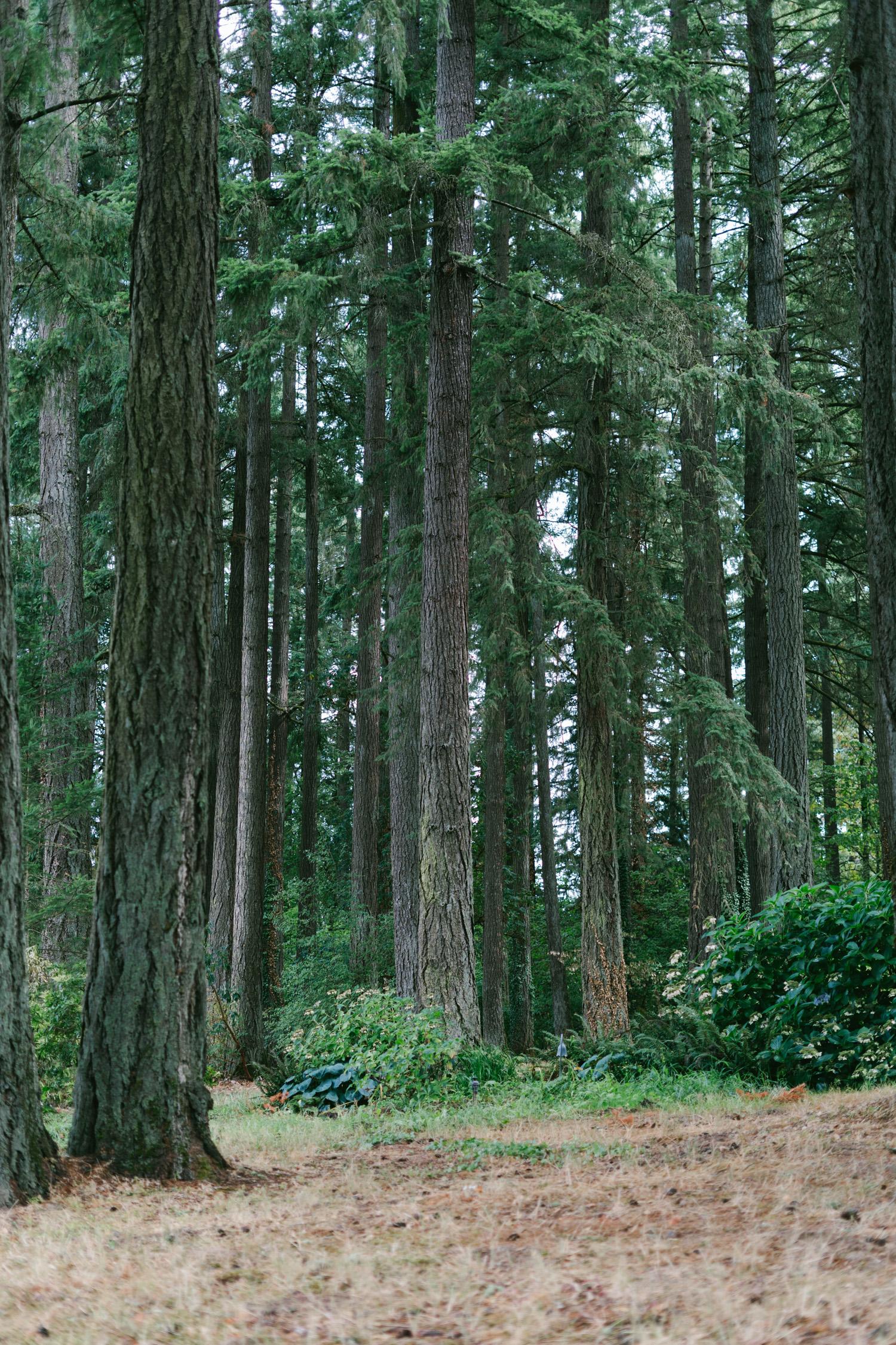 Jenkins Estate Forest
